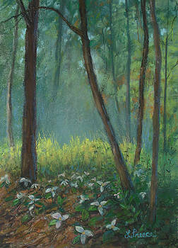 Trillium Trail by Linda Preece