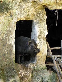 Randi Kuhne - Troglodyte Pig