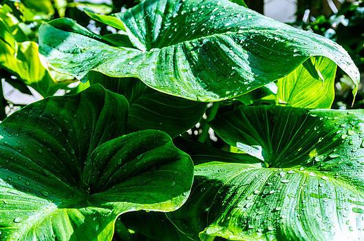 Tropic plant. by Slavica Koceva