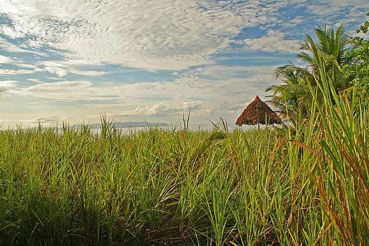 Peggy Collins - Tropical Beach Landscape