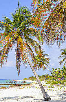Patricia Hofmeester - Tropical beach