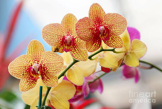 Tropical Beauty by Fir Mamat