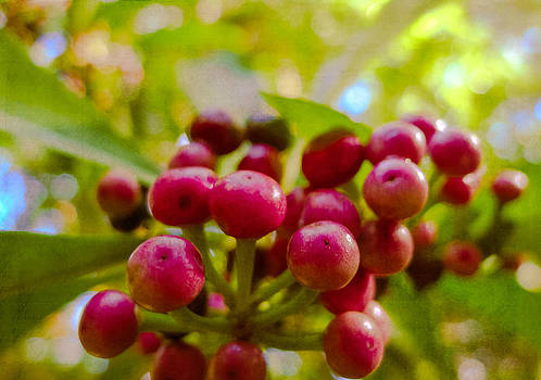 Tropical Berries in Maui Hawaii by Caffrey Fielding
