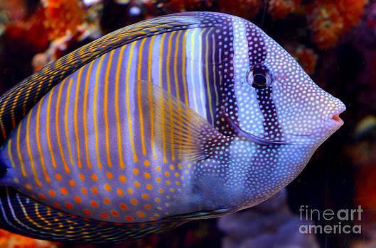 Pravine Chester - Tropical Fish