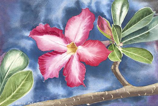 Tropical Flower by Elena Polozova