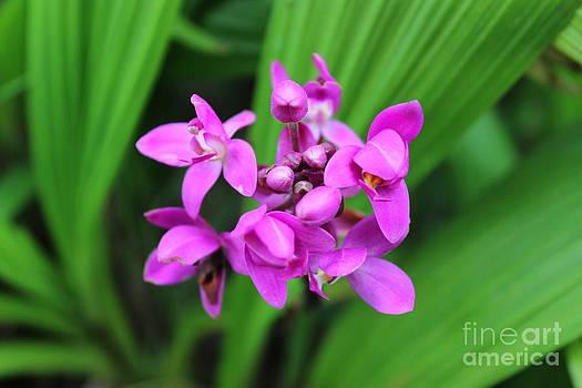 Tropical Flower by Erik Barker