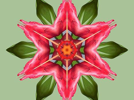 Tropical Flower Mandala by Diane Lynn Hix