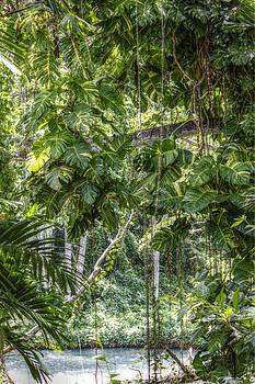 Tropical Foliage by Melanie Lankford Photography
