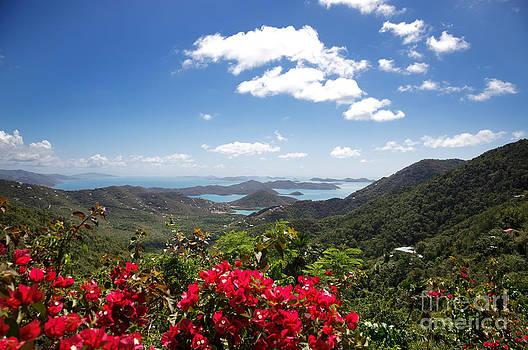 Jo Ann Snover - Tropical Islands