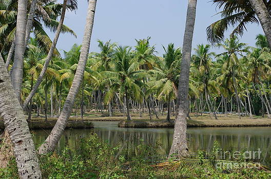 Tropical Lagoon by Heather Gordon