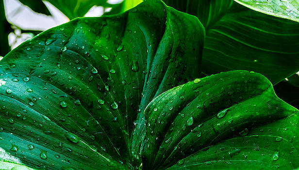 Tropical leaf. by Slavica Koceva