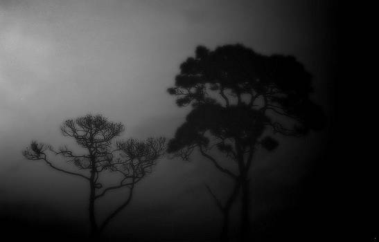 Tropical night by Dave Hrusecky