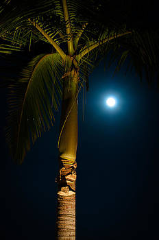 Tropical Night by David Pinsent