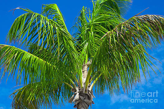 Tropical Palm Portrait by Kimberly Blom-Roemer