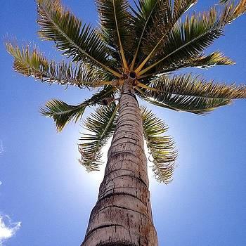 Tropical Palm Tree by Dan Mason