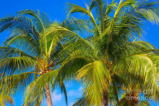 Tropical Palm Trees by Kimberly Blom-Roemer