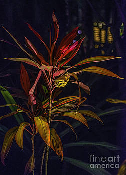 Tropical Plant Abstract by Richard Mason