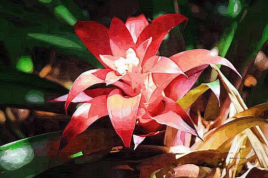 Deborah Hughes - Tropical Red