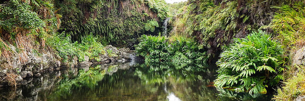 Tropical Reflections by Denise Bird