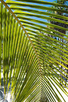 Ramunas Bruzas - Tropical Shadow
