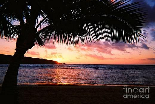 Christine Stack - Tropical Sunrise