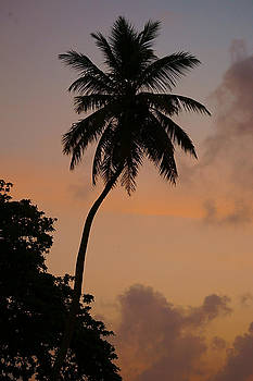 Tropical Sunrise Silhouette by Blair Wainman