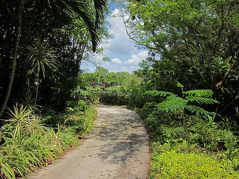 MTBobbins Photography - Tropical Trail