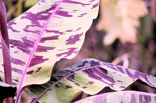 Maria Urso  - Tropical Violet