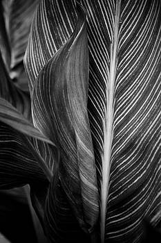 Tropicana Black and White by Kelly Maize