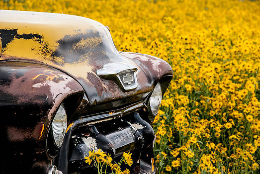 Truck Amid Sunflowers by Shanna Lewis