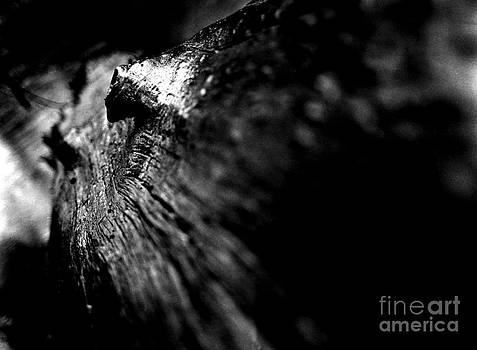 Trunk by Yasin Baran