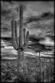 Erika Fawcett - Tucson Cactus