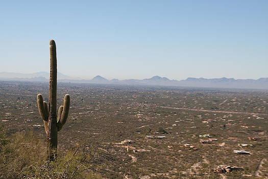 Tucson by David S Reynolds