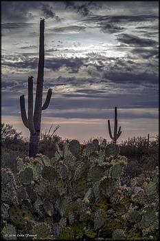Erika Fawcett - Tucson Sunset 2