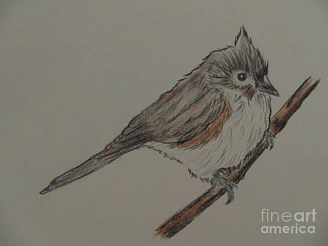 Tuffed Titmouse by Ginny Youngblood