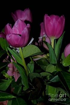 Tulip 2 by Rachael Shaw