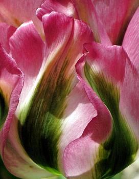Tulip by Andrea Lazar