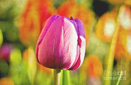 Tulip Collage by Valerie Fuqua
