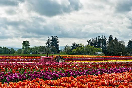 Tulip Farm and John Deere by Peter Dang