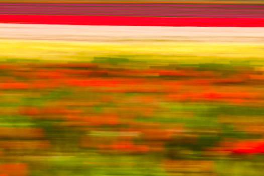 Matt Dobson - Tulip Field Abstract