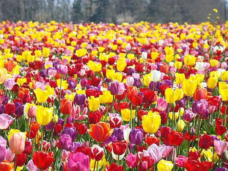 Baslee Troutman - Tulip Flower Festival Art Prints Spring