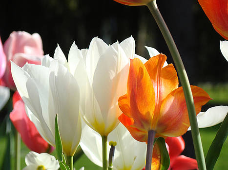 Baslee Troutman - Tulip Flowers Garden Art Prints Lovely