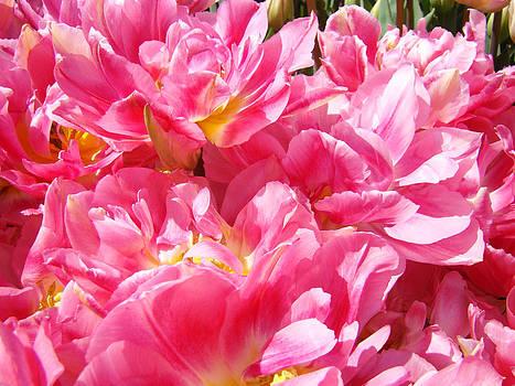 Baslee Troutman - Tulip Flowers Gardens Art Prints Pink Tulip Flowers