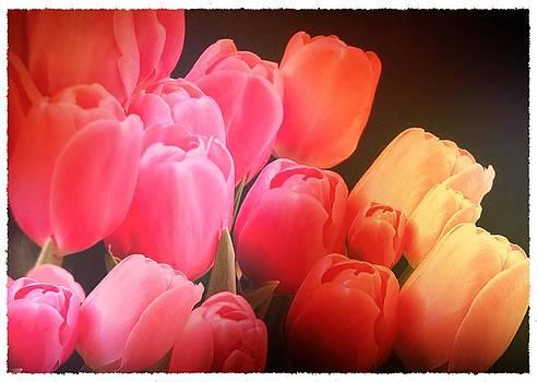 Debra  Miller - Tulip Garden Glow