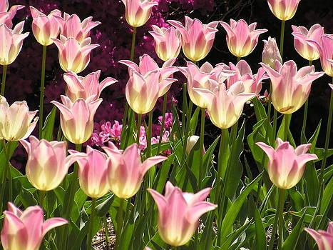 Julie Grandfield - Tulip Glow