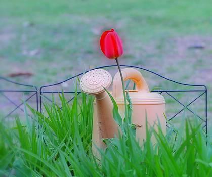 Tulip HDR by Thomas  MacPherson Jr