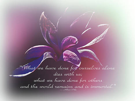 Mother Nature - Tulip Magnolia And Albert Pike Quotation