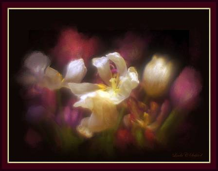 Tulip Medley by Linda Seifried