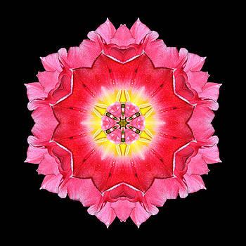Tulip Peach Blossom I Flower Mandala by David J Bookbinder