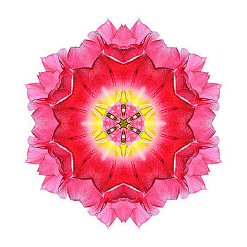 Tulip Peach Blossom I Flower Mandala White by David J Bookbinder